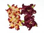 SCB290110 ScarpBerrys Blomster, Gardenia, Bordeaux/Creme&Bordeaux-0