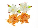 SCB290114 ScarpBerrys Blomster, Gardenia 5cm, Peach/White-0