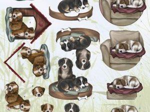 CD10452 Amy Design 3D 1 ark hunde-0