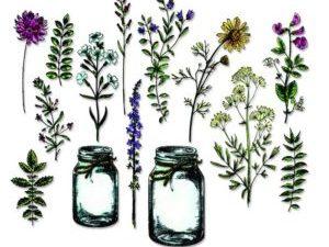 662270 Sizzix Die Tim Holtz Thinlitz Flower Jar-0