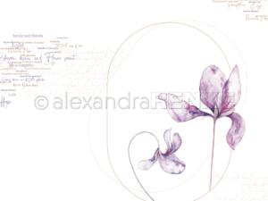 10.1319 Alexandra Renke Designpaper 30x30, Violet Oval-0