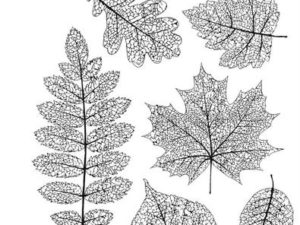 CMS376 Stampers Anonymous Tim Holtz Pressed Foliage-0